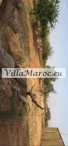 À vendre terrain Driouch